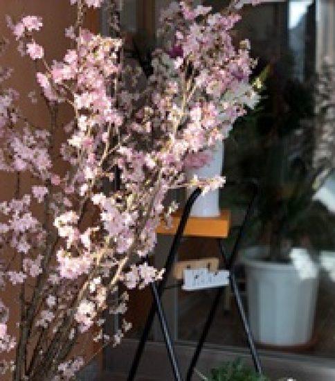 一足早い春が来ました✿